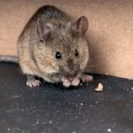 4 Easy Ways to Pest-Proof Your Home